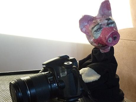 pig camera