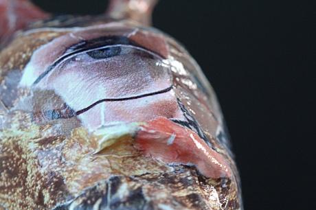 snail-3